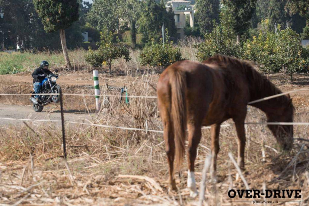עדיין 76 סוסים בתמונה אחת. צילום: בני דויטש.